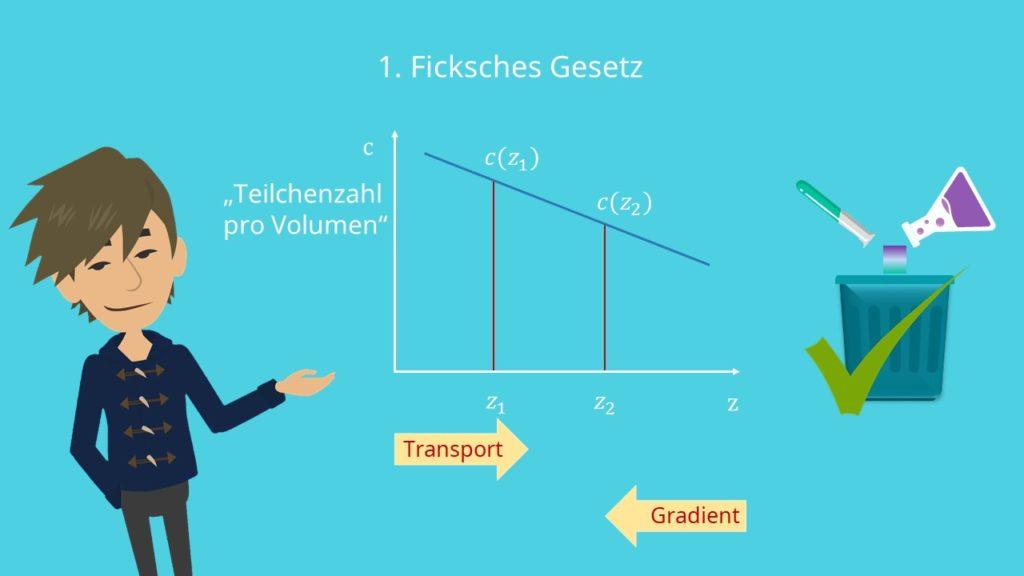 Ficksche Gesetze, Transport, Gradient, Teilchenzahlen, Diffusion, Stofftransport, 1. Ficksches Gesetz