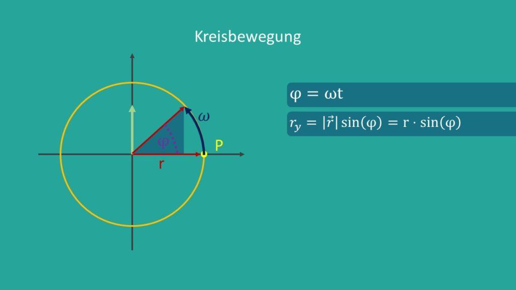 Kreisbewegung, harmonische Schwingung, Phasenwinkel, Winkelgeschwindigkeit, Radius, Sinusschwingung, Oszillator