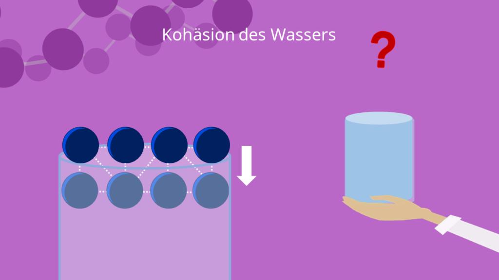 Kohäsion des Wassers Wasserstoffbrückenbindung
