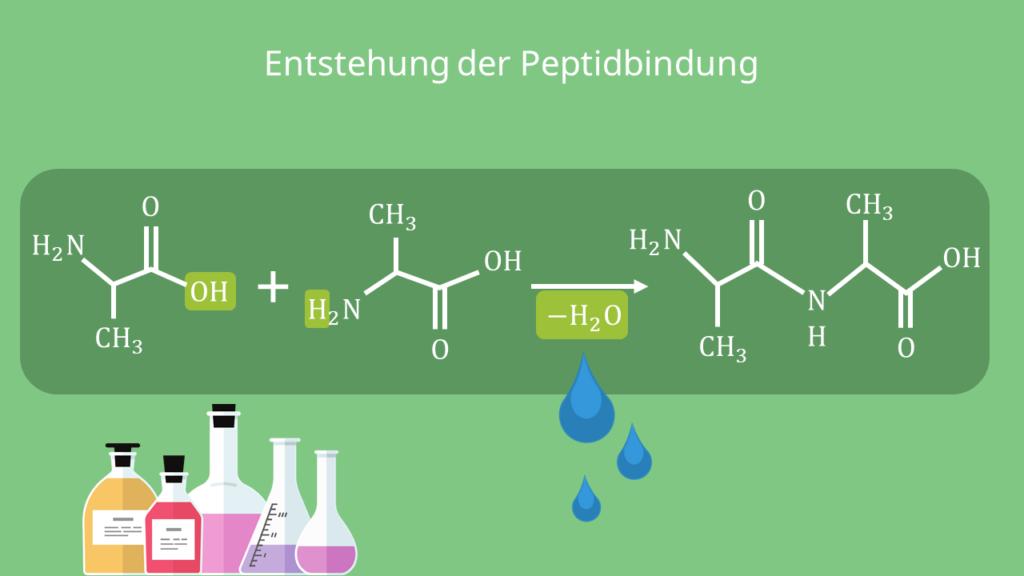Entstehung der Peptidbindung, Struktur, Formel, Strukturformel