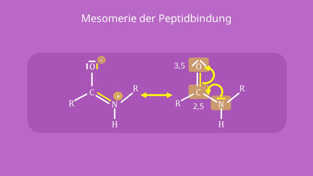 Peptidbindung - Mesomerie, Struktur, Formel, Strukturformel