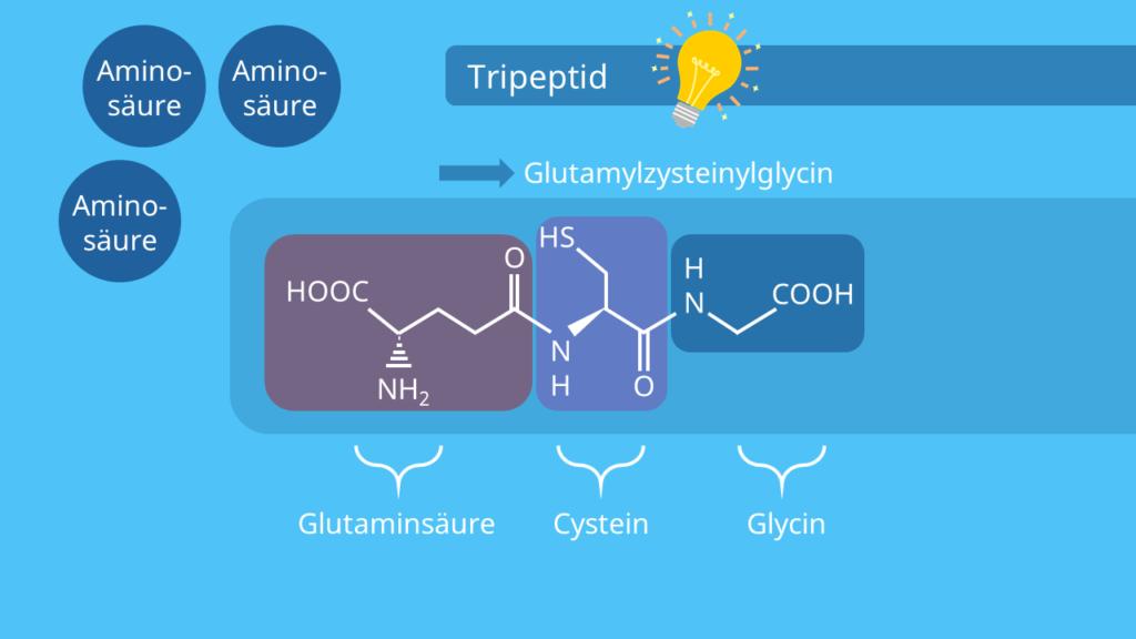 Tripeptid - Glutamylzysteinylglycin, Peptide, Aufbau, Struktur