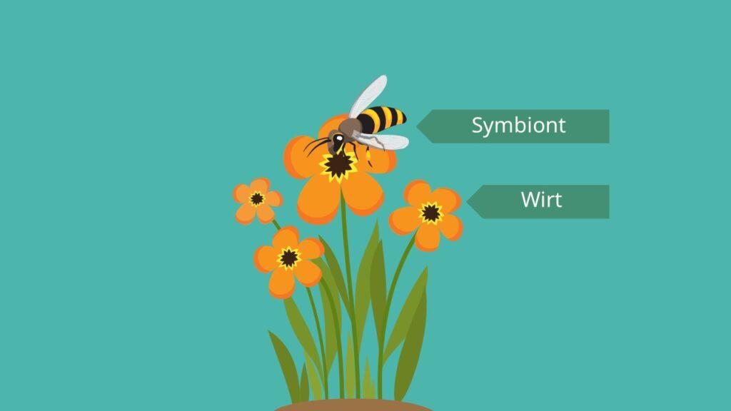 Symbiose, Symbiont, Wirt