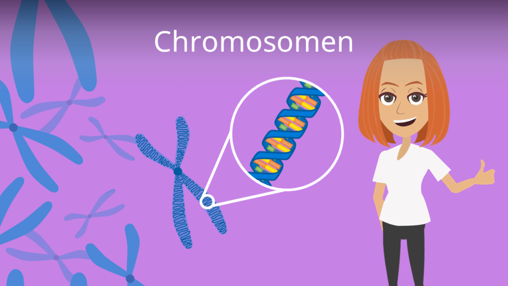 Zum Video: Chromosomen