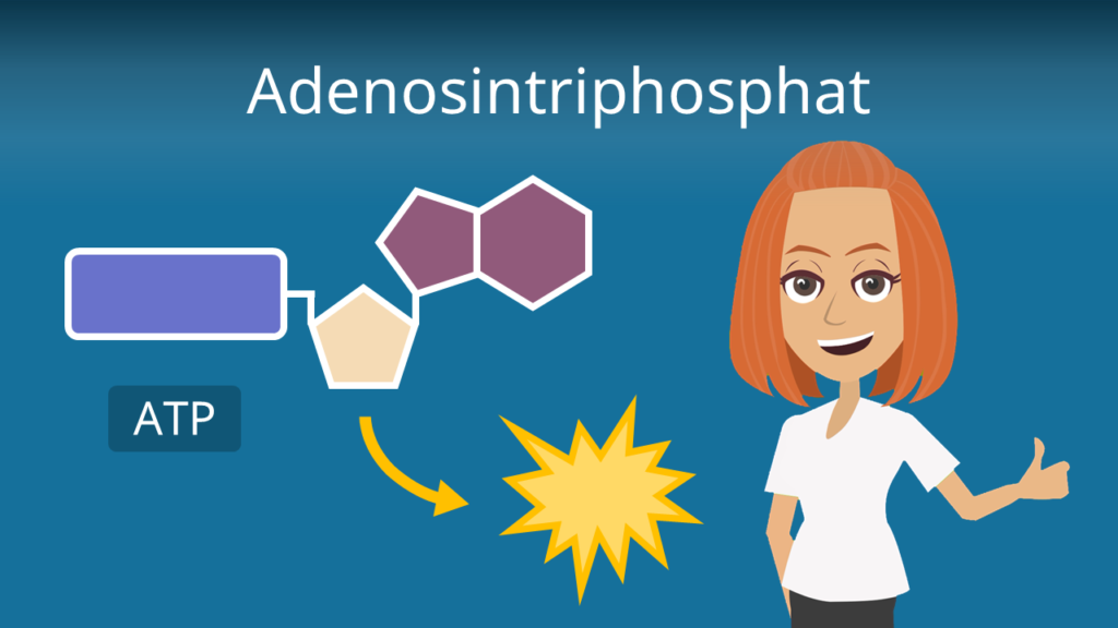 Zum Video: Adenosintriphosphat