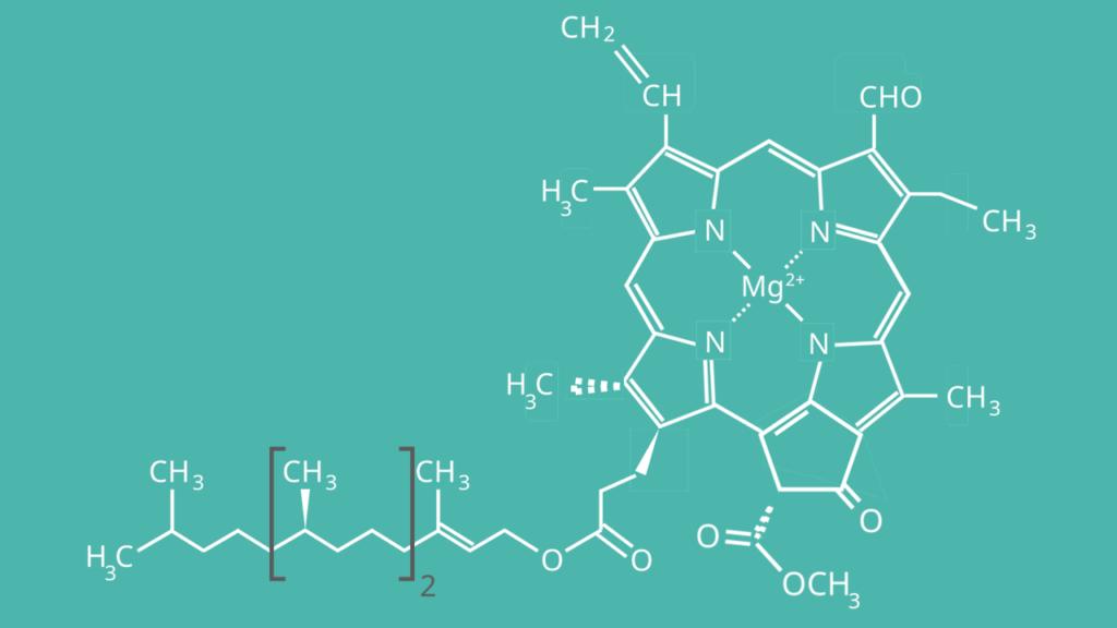 Chlorophyll b, Strukturformel