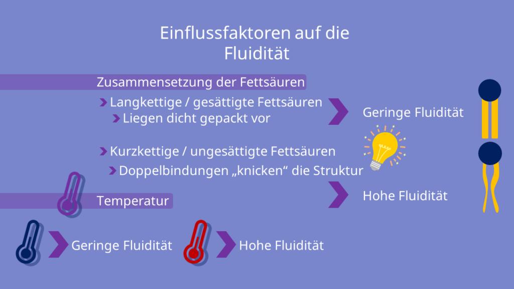 Phospholipide, amphiphil, Zellmembran, Biomembran, Fettsäuren, Membranfluidität