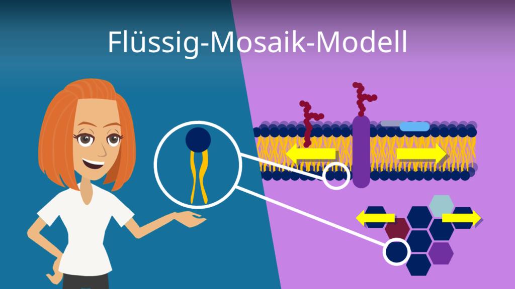 Zum Video: Flüssig Mosaik Modell