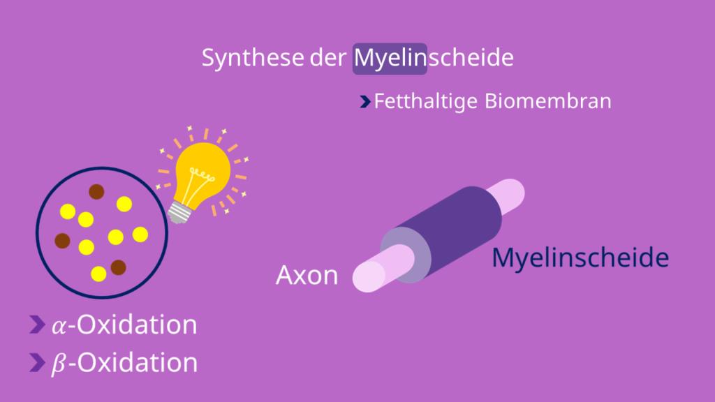 Myelinscheide, Peroxisomen, Nervenzellen