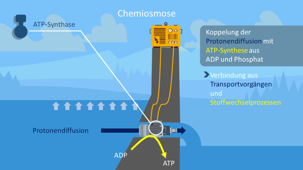 Chemiosmose, ATP-Synthase