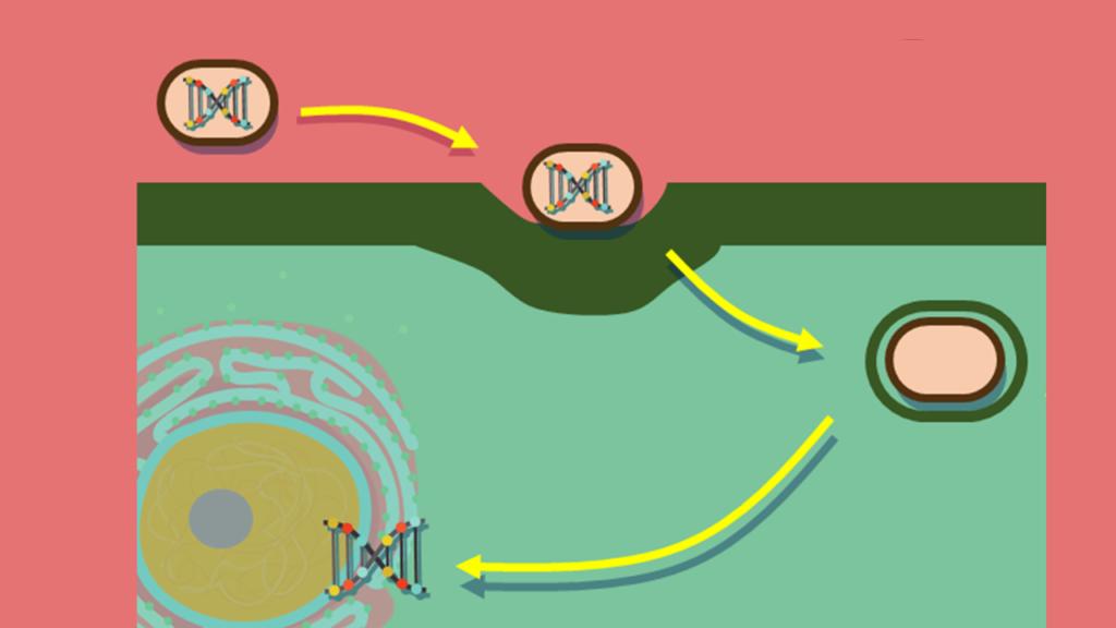 Pilli, Plasmid, Plasmamemban, Cytoplasma, Ribosomen, Fla Pilli, Plasmid, Plasmamemban, Cytoplasma, Ribosomen, Flagellum, Zellwand, Prokaryoten, Bakterien, Phagocytose,Symbiose, Mitochondrien, chloroplastengellum, Zellwand, Prokaryoten, Bakterien, Phagocytose,Symbiose, Mitochondrien, chloroplasten