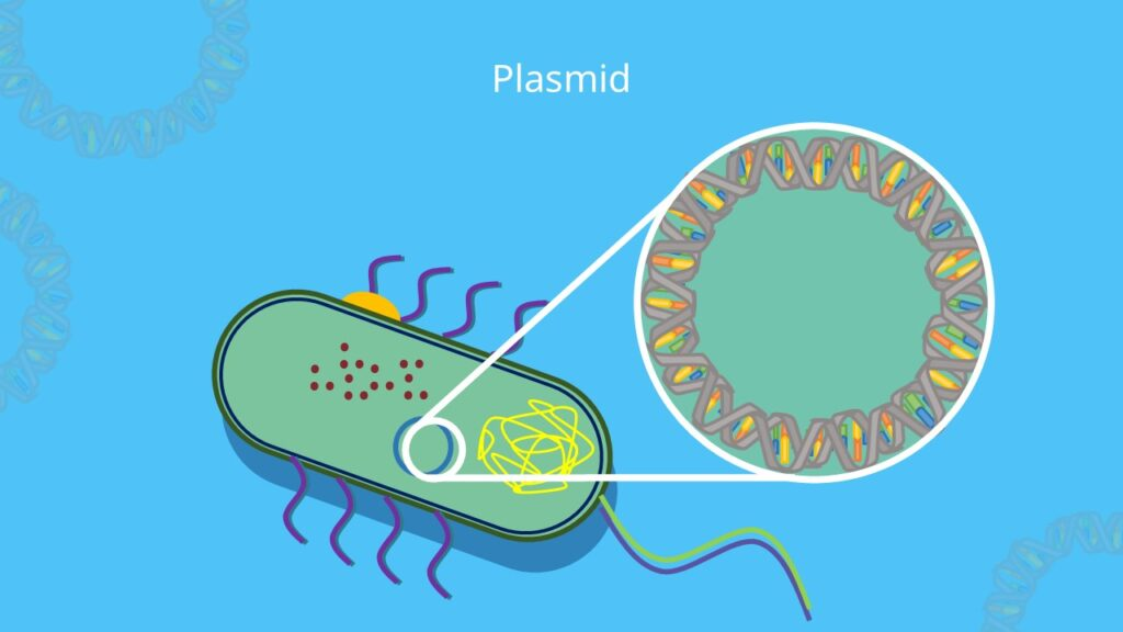 Plasmid, Plasmid Aufbau, DNA