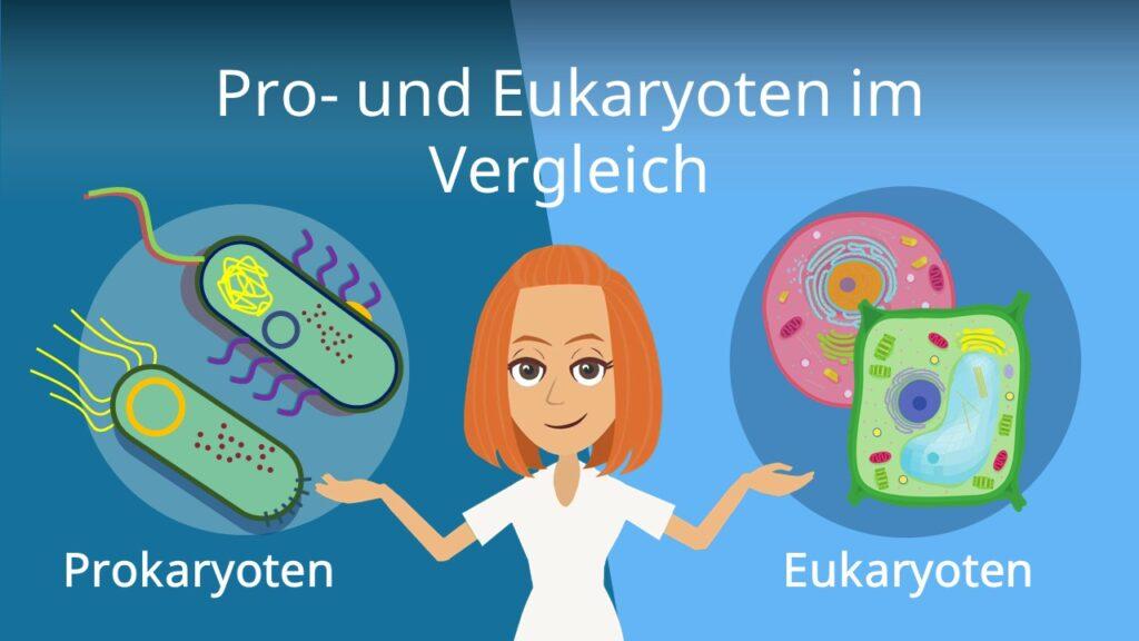 Zum Video: Prokaryoten und Eukaryoten im Vergleich