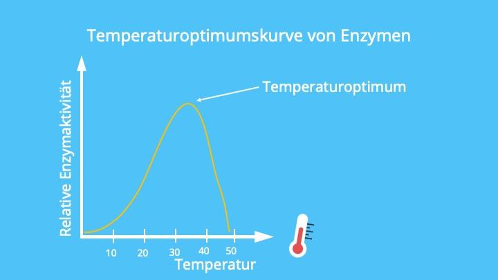 Optimum, Denaturierung, Photosynthese, Photosyntheseleistung, RGT-Regel