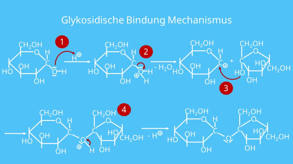 Glykosidische Bindung Mechanismus, Entstehung, Reaktion
