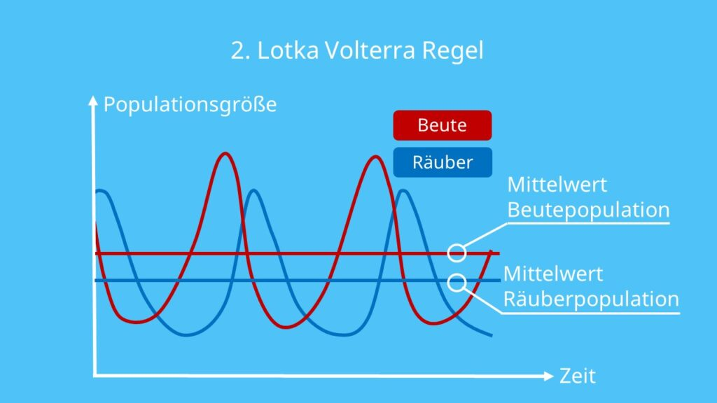 Lotka Volterra Regeln, Darstellung, Beute, Räuber, Räuber Beute Beziehung, Schwankungen, Entwicklung der Population