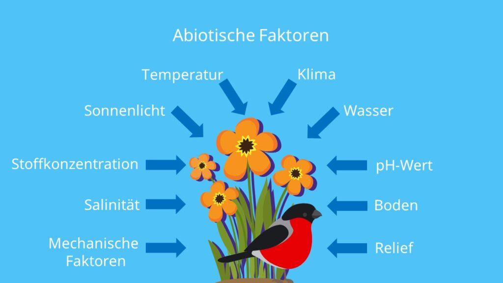 Wechselwirkung, Biotische Faktoren, Ökosystem, Biotop, Lebewesen, Pflanzen, Tiere, Abiotischer Faktor, Ökofaktoren, Abiotische Umweltfaktoren