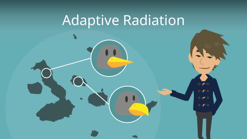 Zum Video: Adaptive Radiation