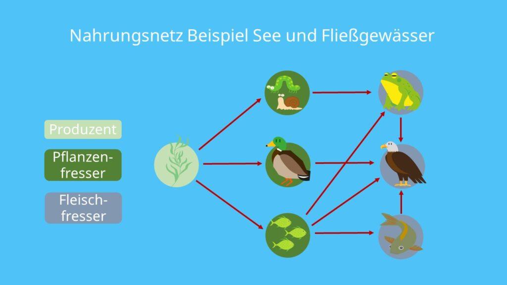 Produzenten, Konsumenten, Destruenten, Pflanzen, Fleischfresser, Pflanzenfresser