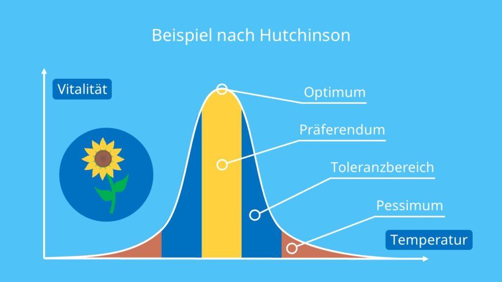 Beispiel nach Hutchinson, Sonnenblume, Temperatur, Umweltfaktor, Beispiel, Hutchinson, Ökologische Nische, Nischenraum, Mathematische Erfassung, Hyperraum, abiotische Faktoren, Biotische Faktoren