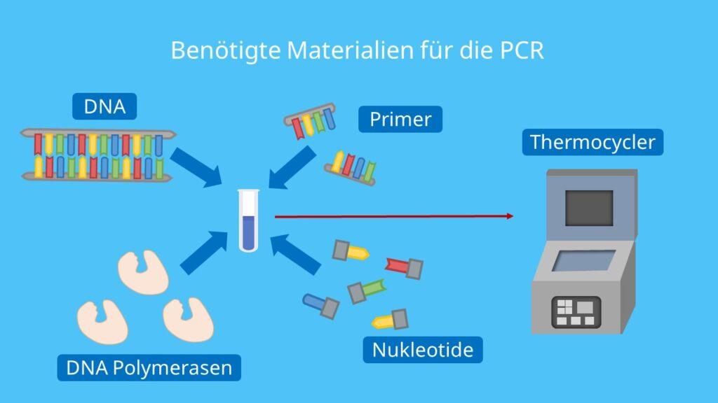 DNA, PCR, Polymerase Kettenreaktion, Primer, Nukleotide, DNA Polymerase, Thermocycler