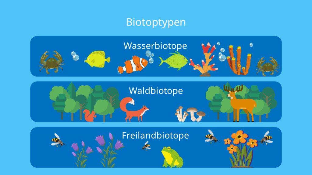 Biotop Definition Beispiel Und Biotopschutz Mit Video 5