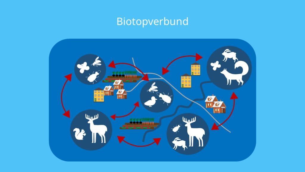 Biotopvernetzung, Lebensraum, Biotop, Biozönose, Vernetzen, Reviere, Migration, Dispersion