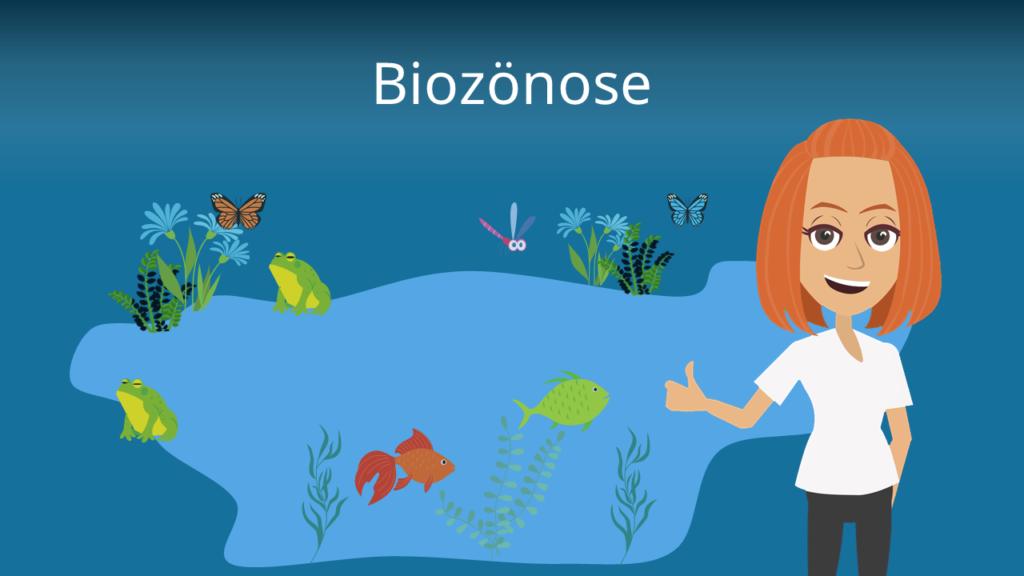 Biotop Definition Beispiel Und Biotopschutz Mit Video 7