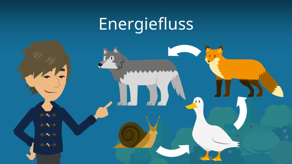 Zum Video: Energiefluss