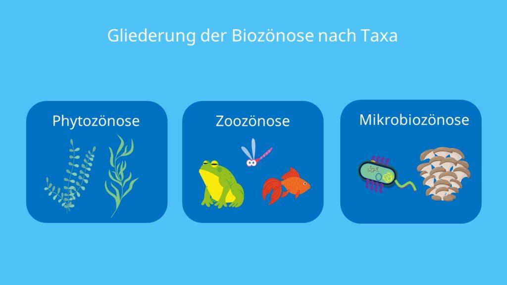 Taxon, Phytozönose, Zoozönose, Mikrobiozönose, Zönose, Gemeinschaft, Pflanzen, Tiere, Mikroorganismen, Unterteilung
