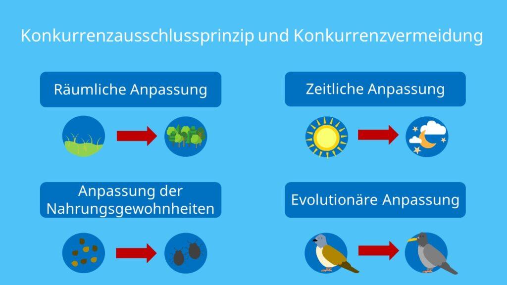 Räumliche Anpassung, zeitliche Anpassung, Nahrungsgewohnheiten, Evolution, Schwächere Art, Dominantere Art, Konkurrenz, interspezifisch