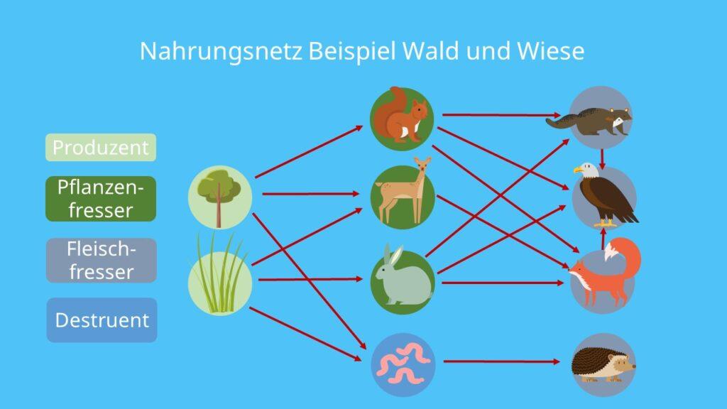 Produzenten, Konsumenten, Destruenten, Nahrungsnetze, Fleischfresser, Pflanzenfresser, an Land, Pflanzen