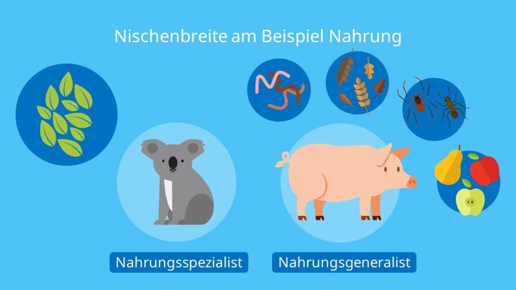 Nischenbereite am Beispiel Nahrung, Ökologische Nische, Spezialisten, Generalisten, Nahrung, Koala, Schwein, Summe aller Ressourcen