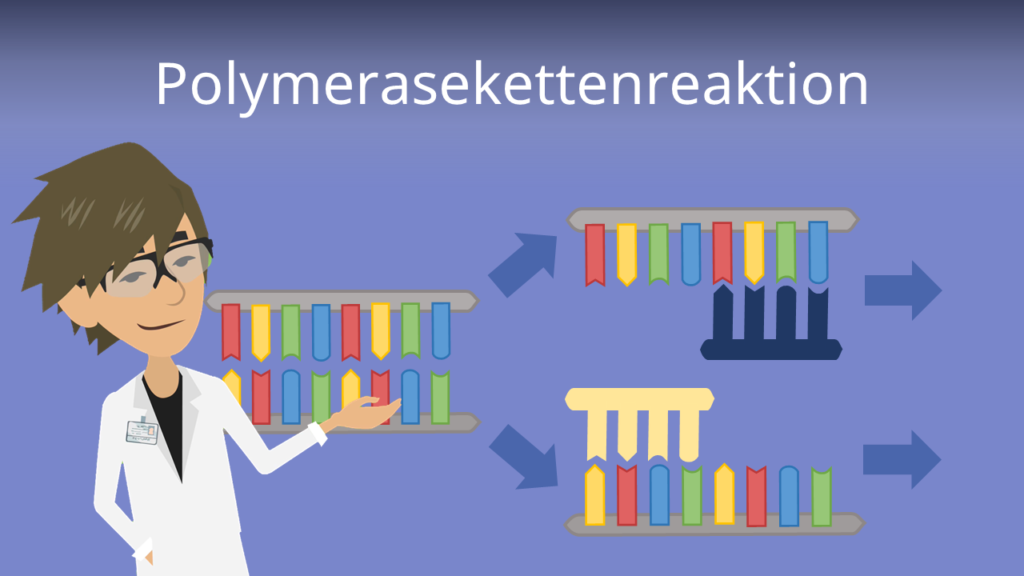 Zum Video: Polymerase Kettenreaktion