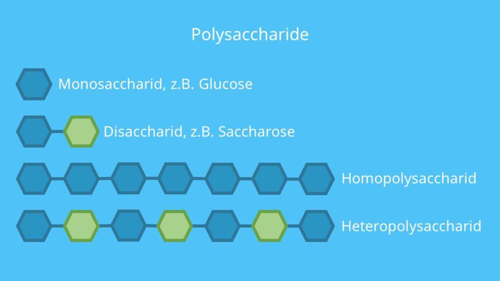Polysaccharide, Monosaccharide, Disaccharide, Monosaccharid, Disaccharid, Polysaccharid, Homoglykan, Heteroglykan, Homoglykane, Heteroglykane