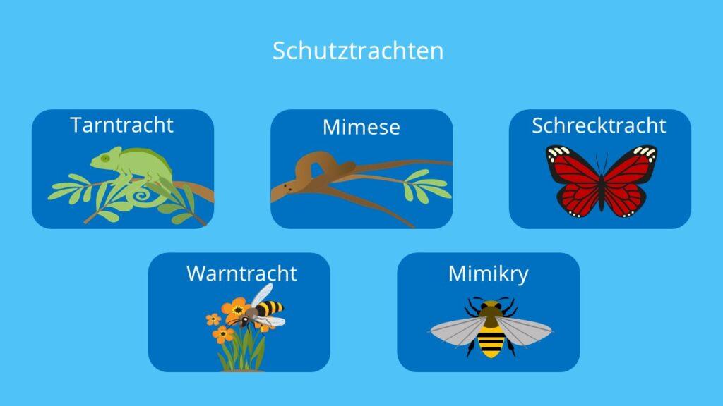 Tarntracht, Mimose, Schrecktracht, Warntracht, Mimikry, Beute, Beutetiere