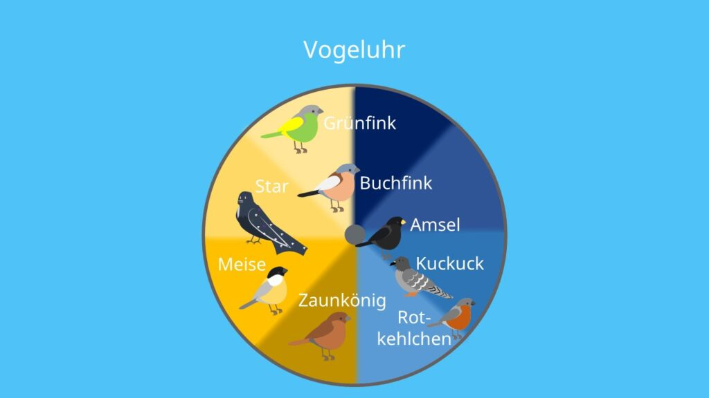 Abiotischer Faktor Licht; Vögel, Gesang, Helligkeit, innere biologische Uhr, Tag- Nachtrhythmus