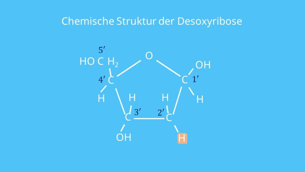 Desoxyribose, Zucker, DNA, Ribose, Sauerstoff, Kohlenstoff, Nukleotid