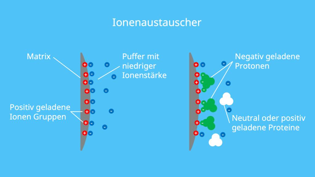 Proteine, mobile Phase, stationäre Phase, Pufferlösung, Säulenchromatografie, Ionen, Biochemie