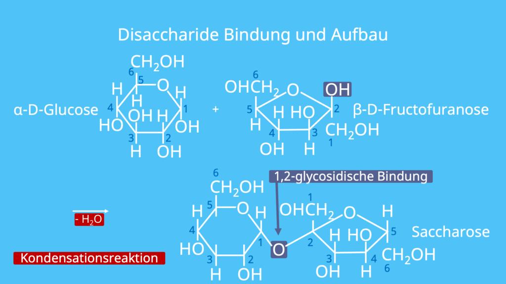 Disaccharide Bildung, Disaccharide Aufbau, Disaccharid, Saccharose, Glucose, Fructose