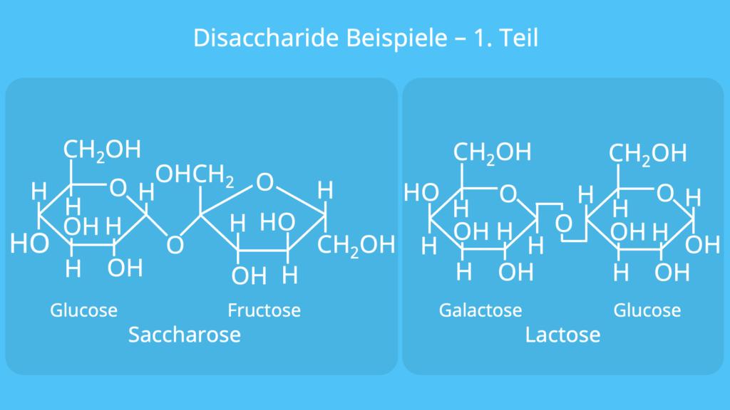 Disaccharide Beispiele, Disaccharid Beispiel, Saccharose, Lactose, Maltose, Trehalose, Cellobiose