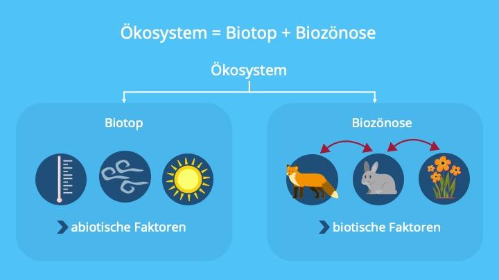 Okologie Aufbau Von Okosystemen 6