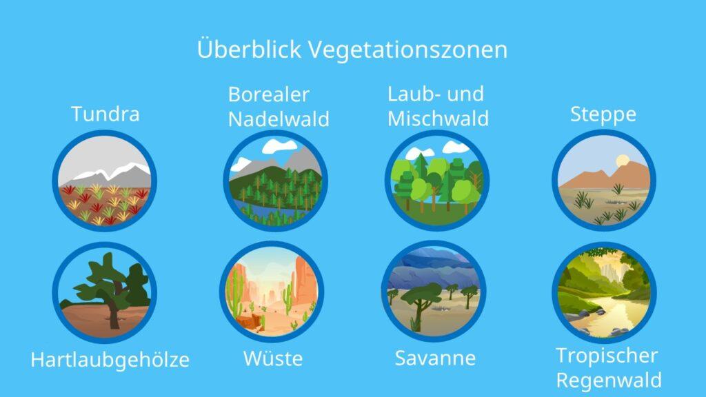 Vegetationszone, Tundra, borealer Nadelwald, Laub- und Mischwald, Steppe, Hartlaubgehölze, Wüste, Savanne, tropischer Regenwald