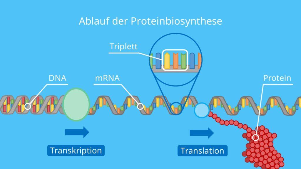 Genetischer Code Universell