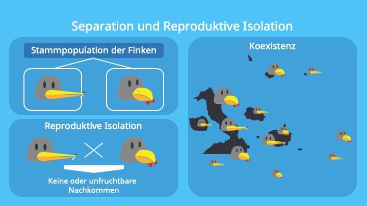 Adaptive Radiation; Teilpopulation, Separation, Koexistenz, Genetische Unterschiede