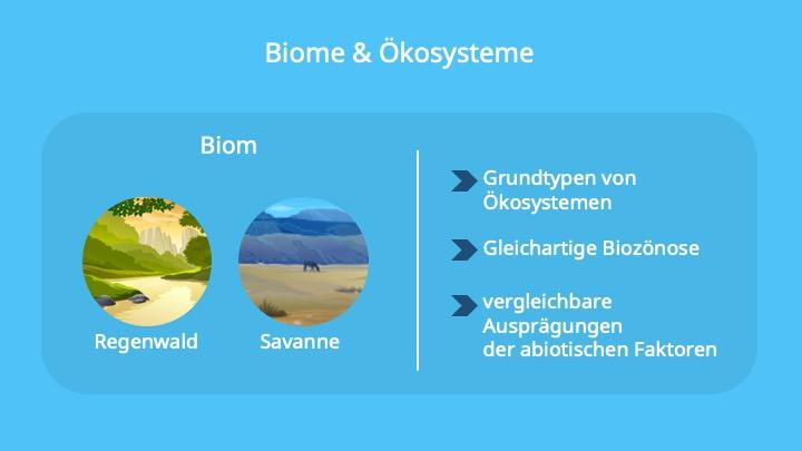 Okosystem Definiton Gliederung Und Energiefluss Mit Video