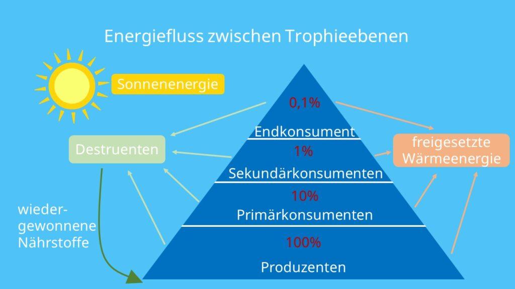 Produzenten, Destruenten, Konsumenten, Energie, Sonnenlicht, Photosynthese