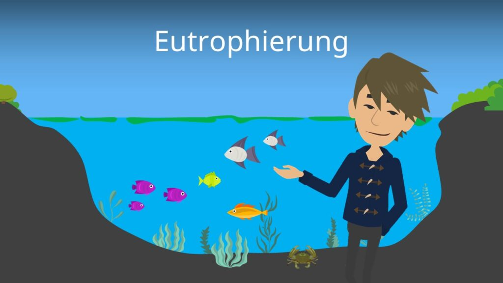 Zum Video: Eutrophierung