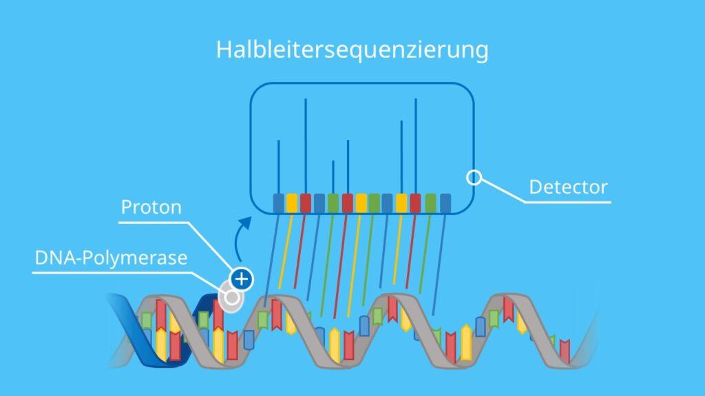 Halbleitersequenzierung, Halbleiter, DNA Sequenzierung, Adenin, Thymin, Guanin, Cytosin, Nukleotide, DNA Polymerase, next generation sequencing