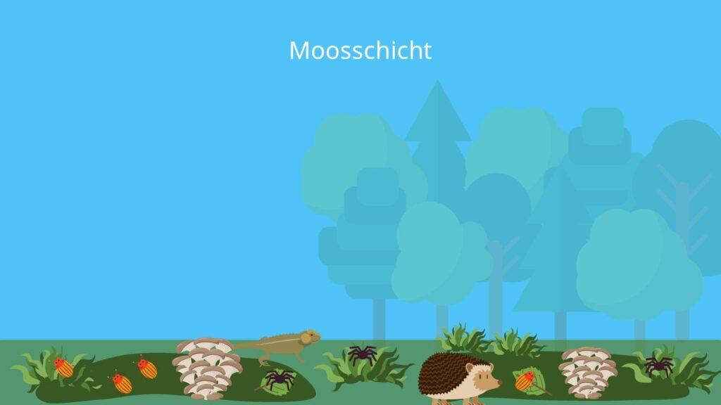 Bodenschicht, Stockwerke des Waldes, Schichten des Waldes, Erdgeschoss Wald, Waldschichten, Ökosystem Wald